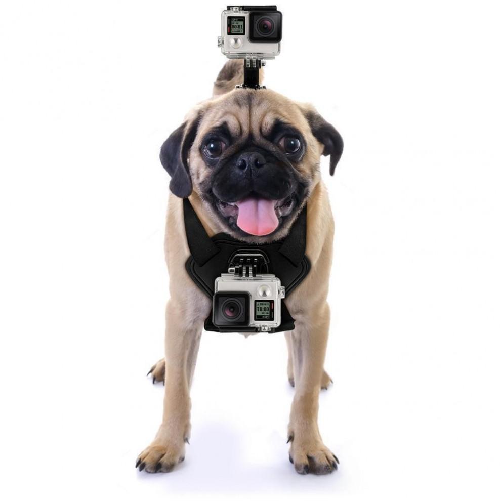 دوربین های ورزشی انتخابی مناسب برای نصب روی حیوانات خانگی